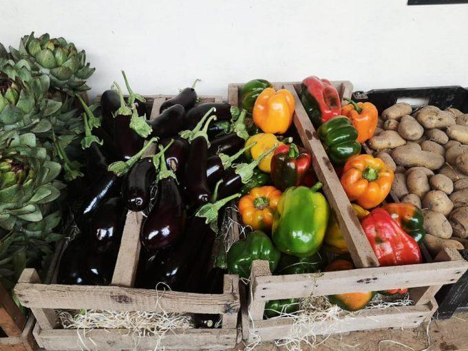Large variété de légumes en maraîchage