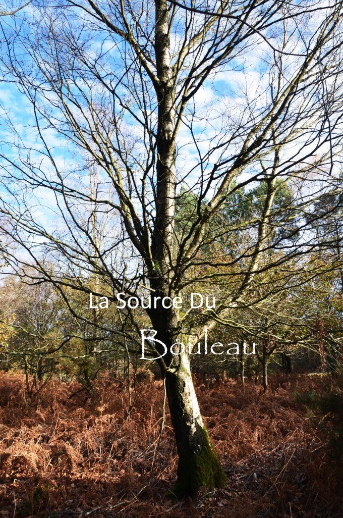 La Source du Bouleau
