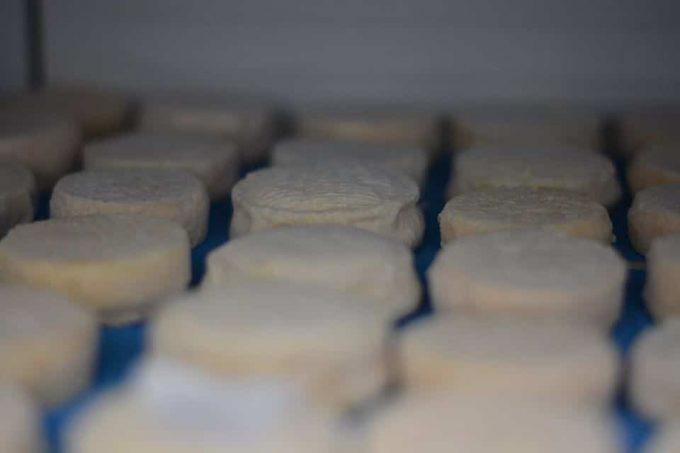 Des fromages tout frais