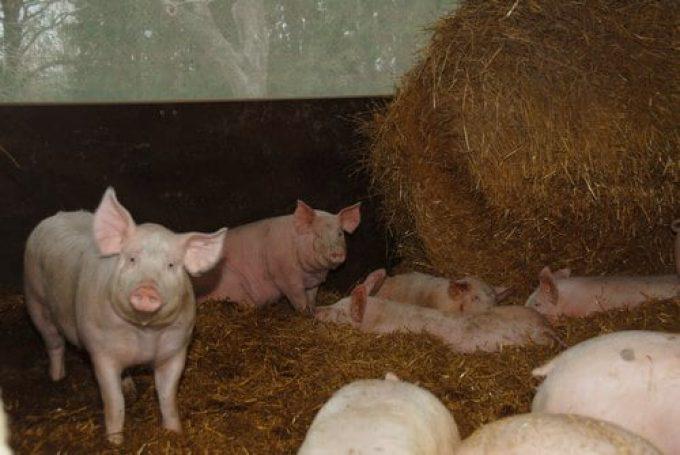 Alimentation produite directement sur la ferme.