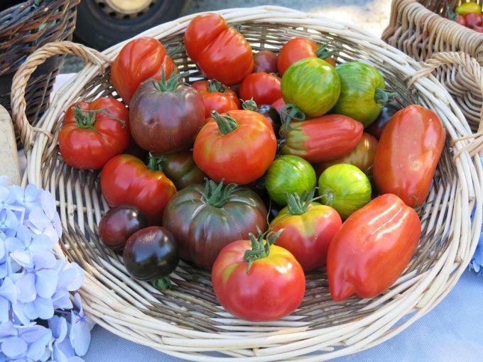 Des tomates de variétés anciennes