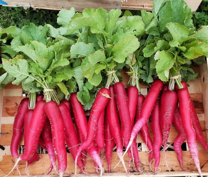 Légumes du Train Carottes