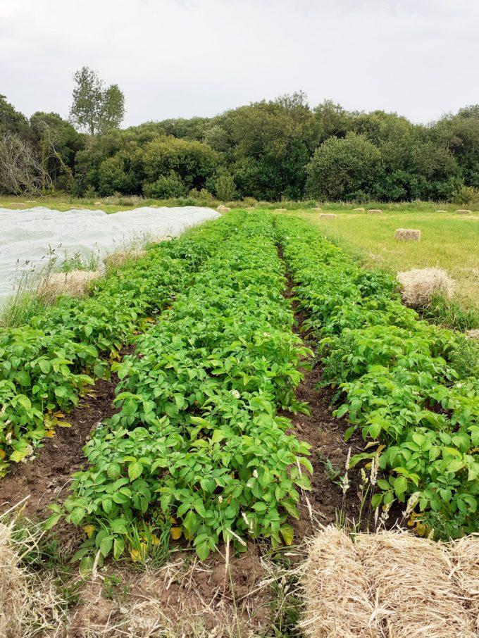 Légumes du Train Carottes - haricots verts