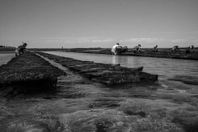 Marée basse sur les huîtres...