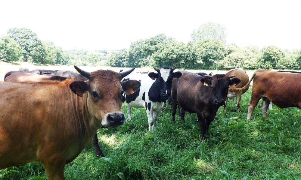 Comment bien choisir sa viande bovine ? On vous explique tout !