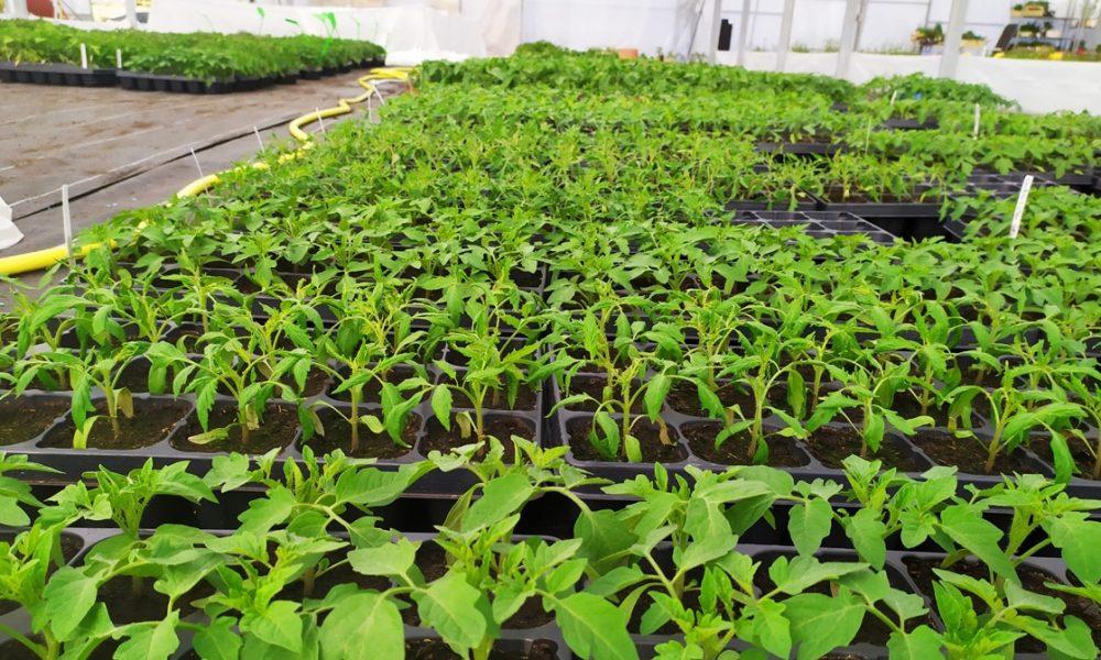 Ty Plant, pépinière locale, Bretonne et BIO ! 🌱