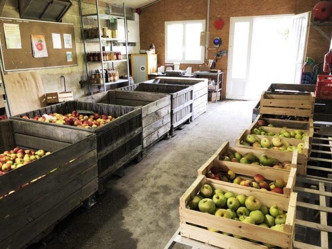 Producteurs de pommes