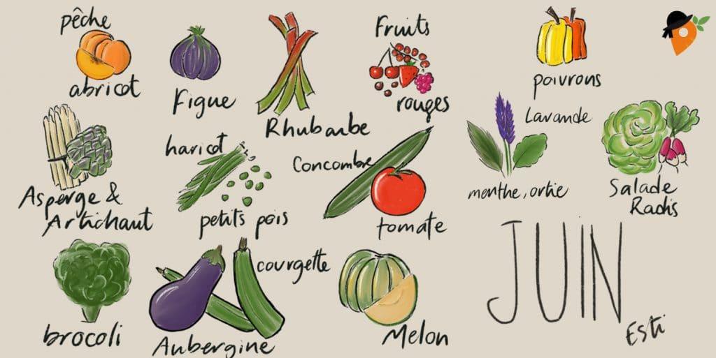 Juin - Liste des fruits et légumes de saison
