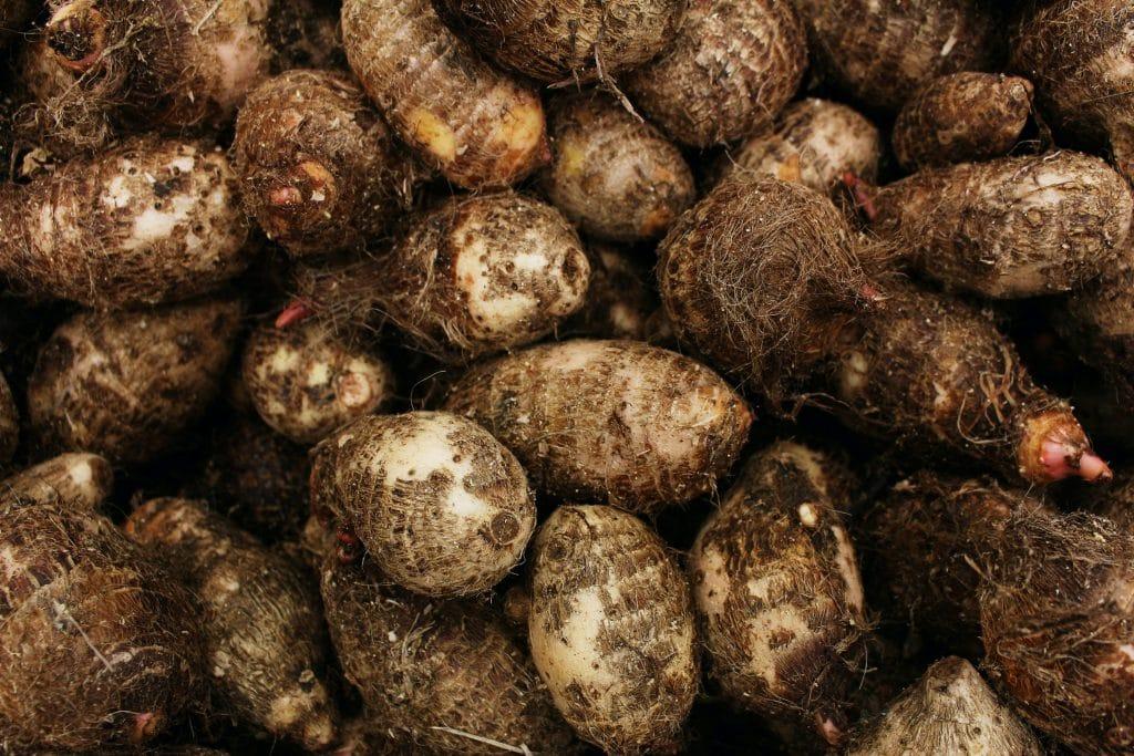 Le cerfeuil tubéreux : une saveur entre châtaigne et pomme de terre...