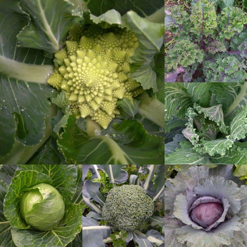 Novembre - Liste des fruits et légumes de saison