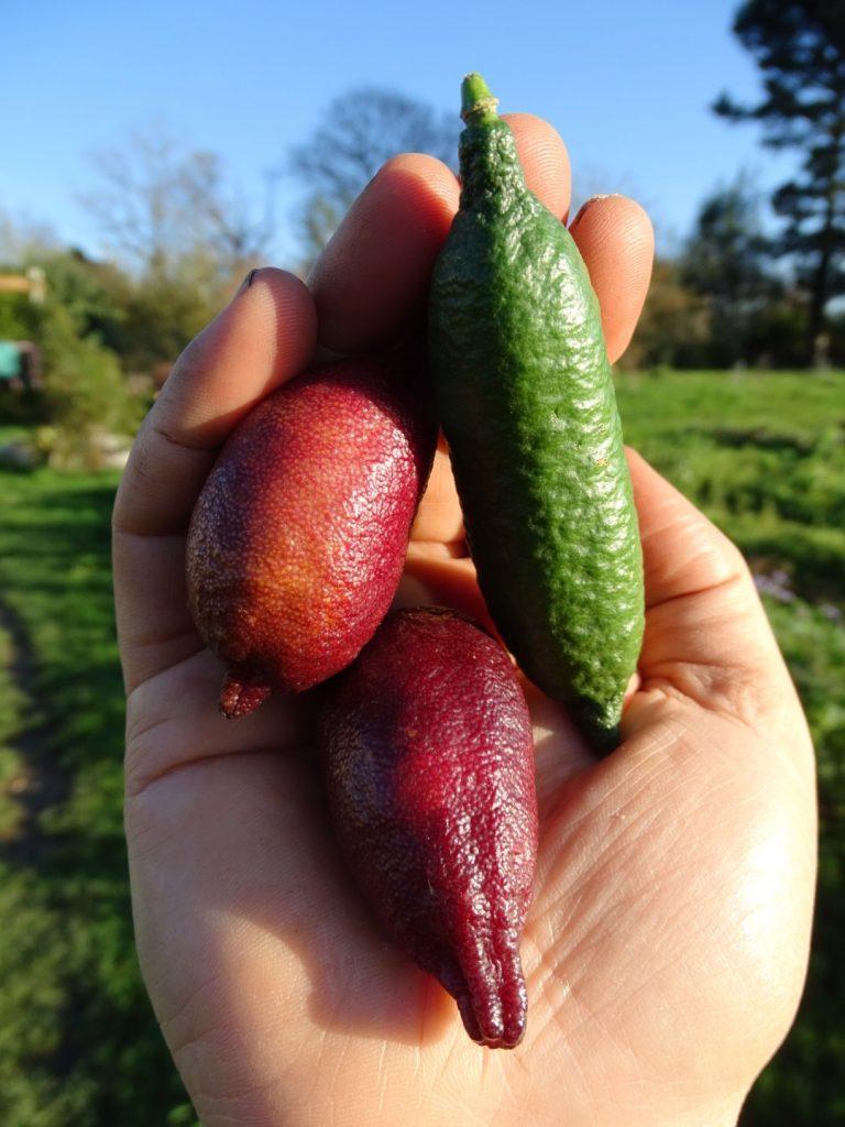 Décembre - Liste des fruits et légumes de saison