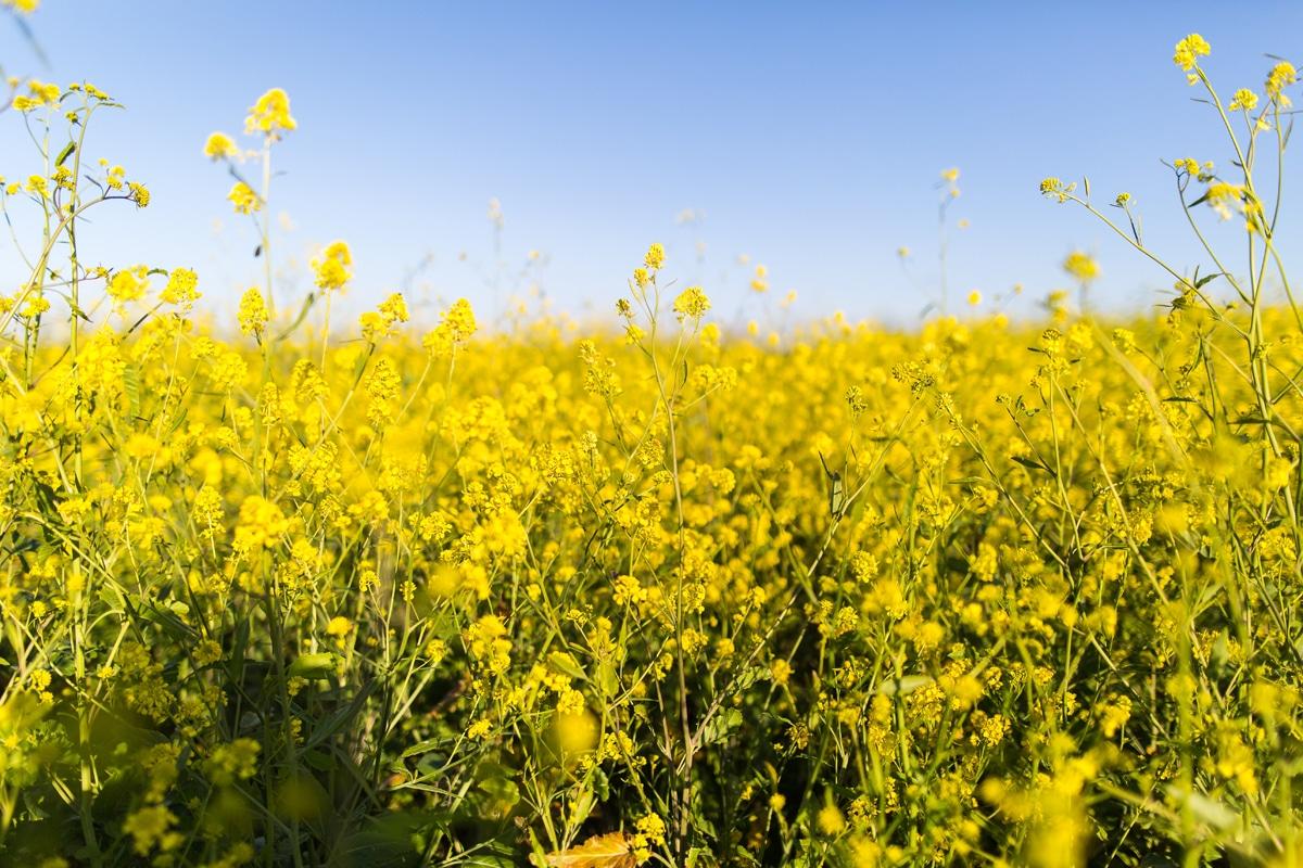 Guide pour y voir plus clair parmi les huiles végétales