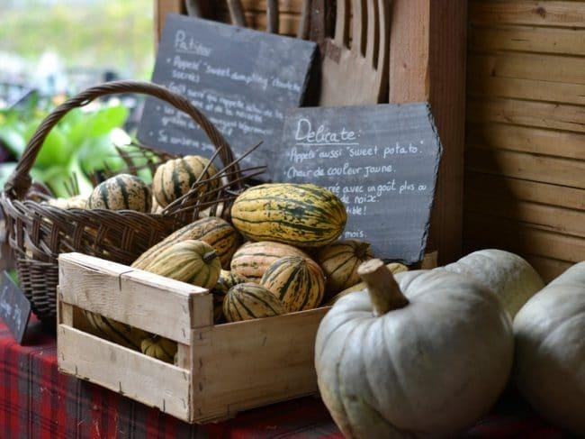 Guide des légumes de saison : le calendrier mois par mois