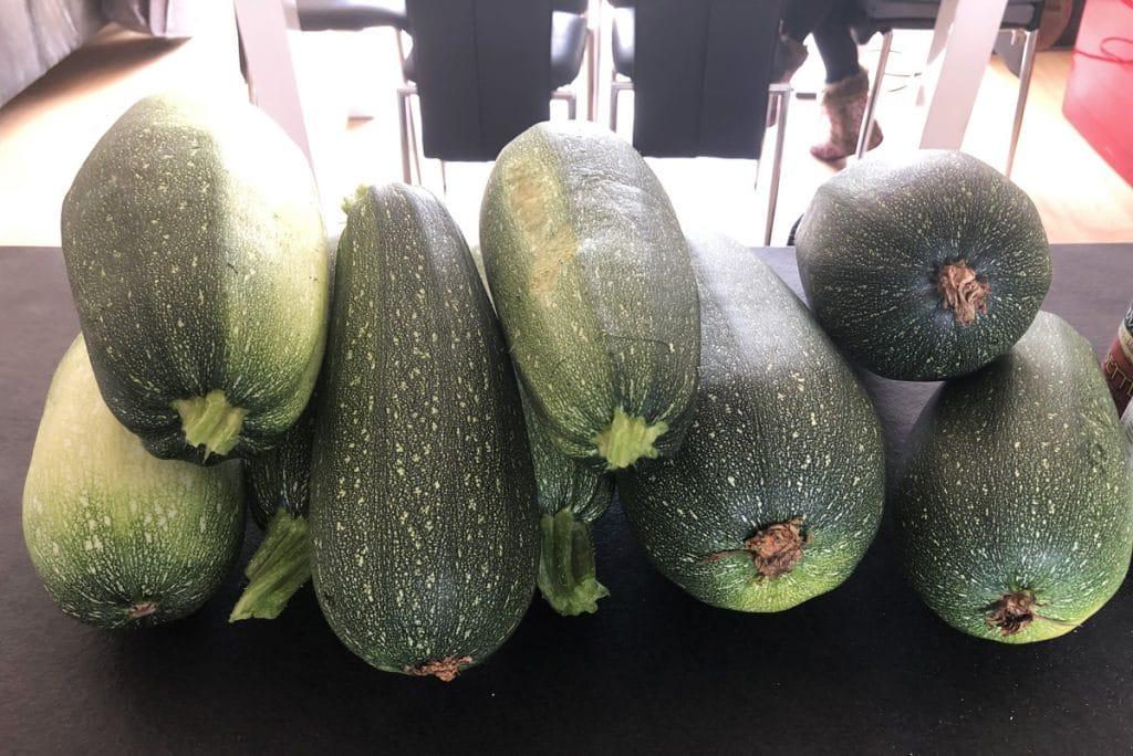 Gratin de courgettes : une recette de saison, facile et rapide
