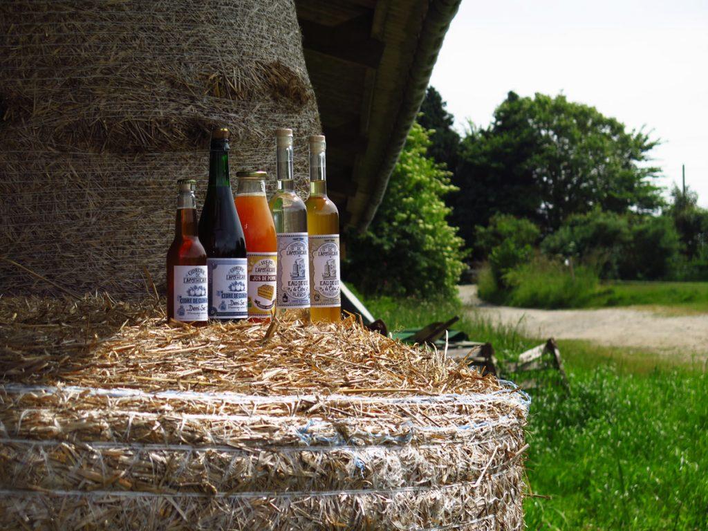 """""""De la pomme au cidre"""" : comment fait-on, en Bretagne, le meilleur cidre au monde ?"""
