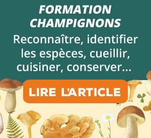 Formation champignons