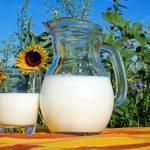 Traite de juments et dégustation de lait de juments