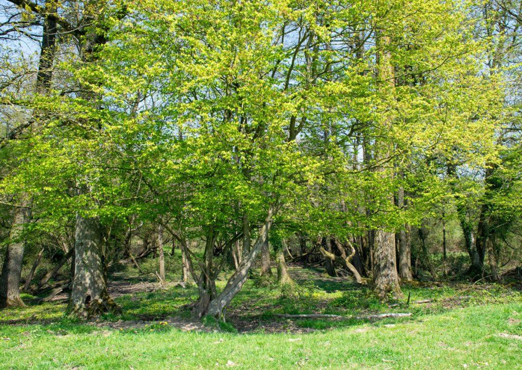 La biodiversité au centre de la microferme Celtique, en Bretagne