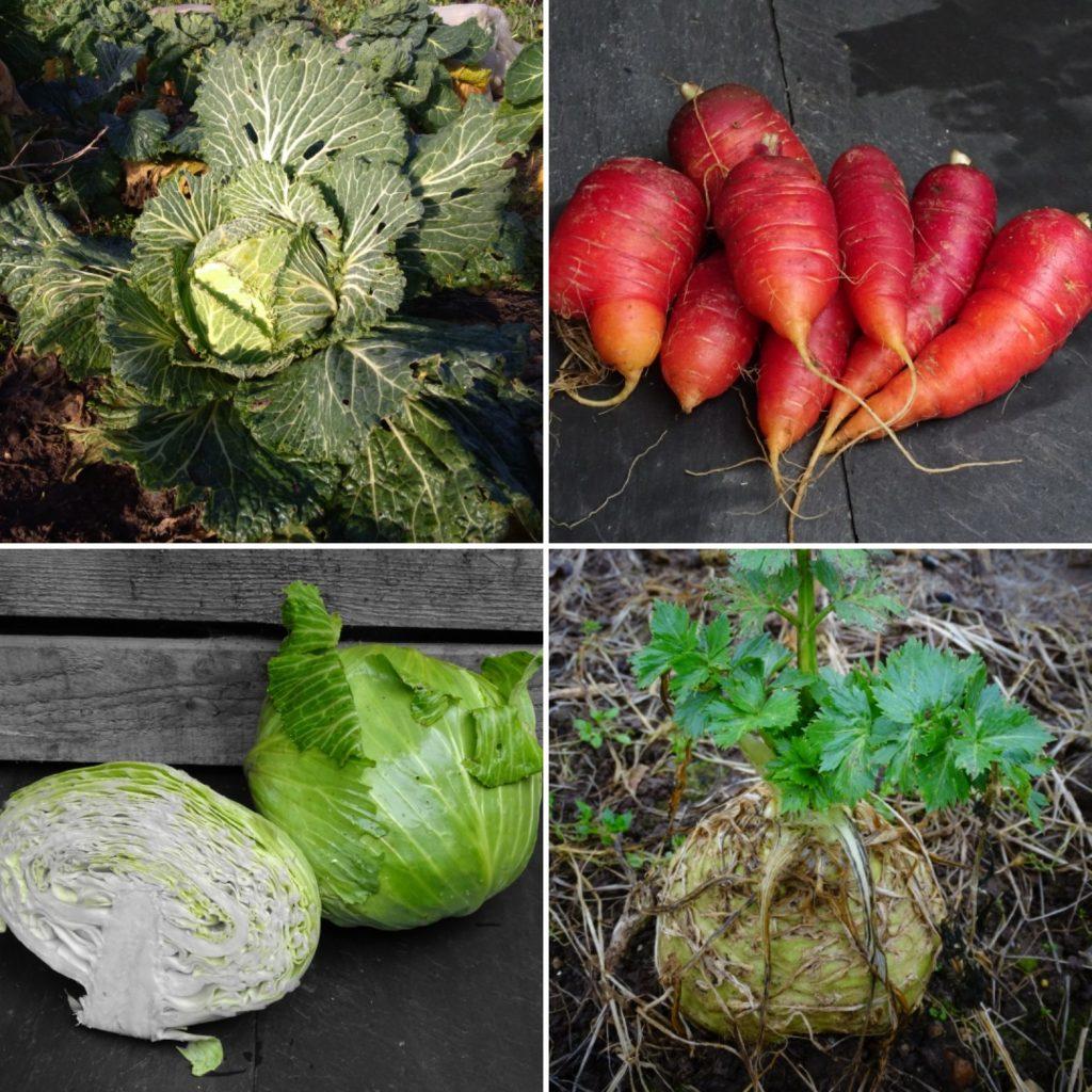 Mars - Liste des fruits et légumes de saison