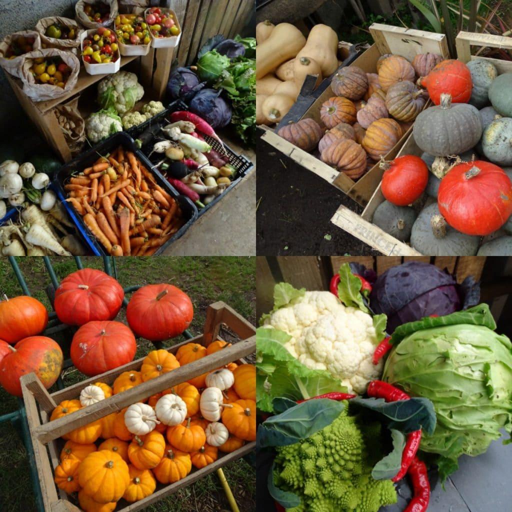 Octobre - Liste des fruits et légumes de saison