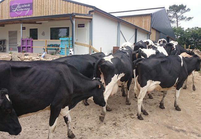 Les Vaches de Lesvenez