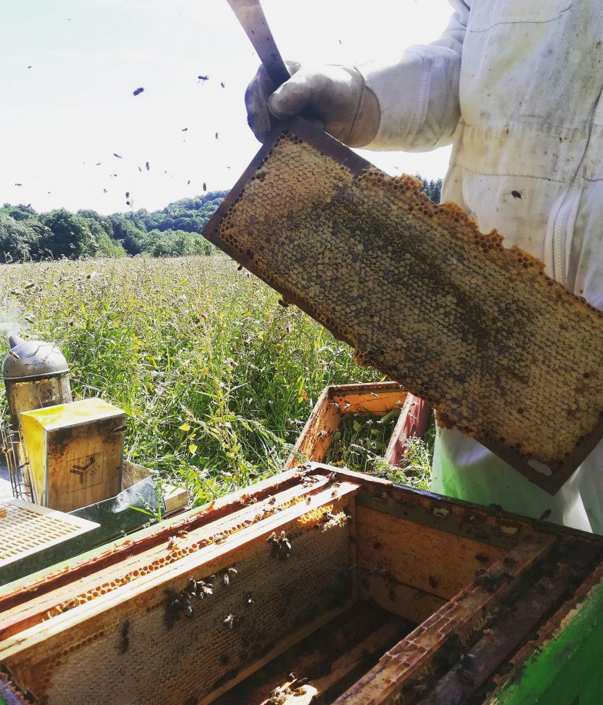 Le miel de sarrasin : précieux et délicieux