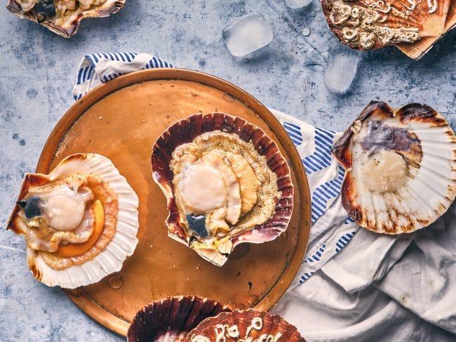 La coquille Saint-Jacques : saison, pêche, recettes…