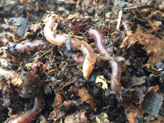 Organic Worms : Un élevage de vers de terre 100% Breton