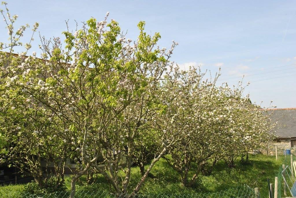Le cidre breton NEEDS YOU ! - Interview de Guillaume, un croqueur de pommes...