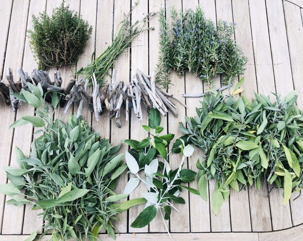 Cueillir des Plantes Sauvages 🌿 : LA Formation, complète et géniale